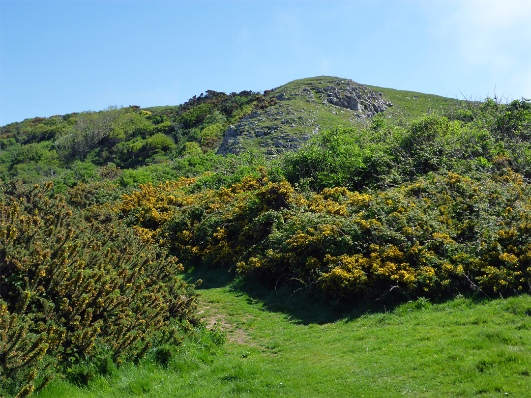 Path through gorse