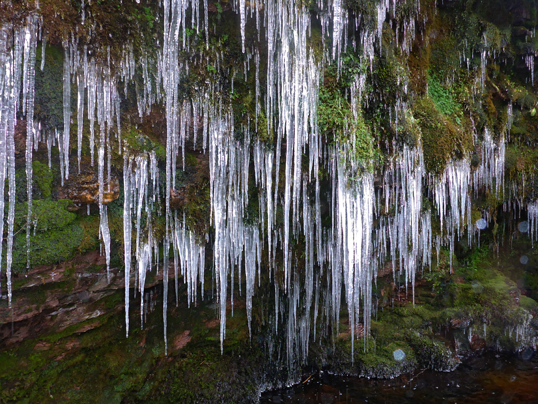 Many icicles
