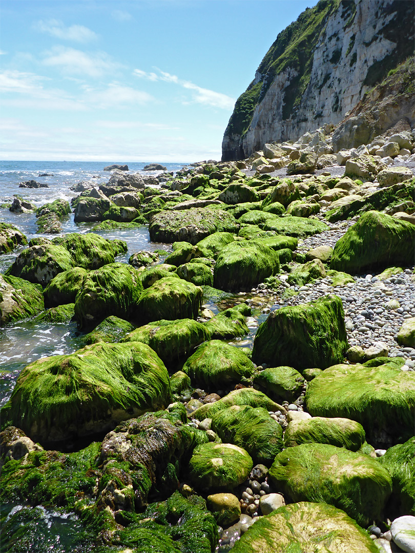 Seaweed-covered rocks