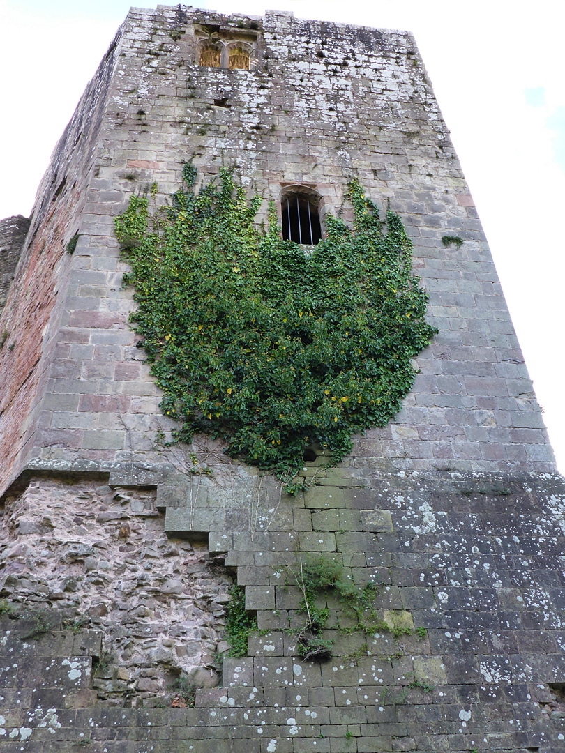 Ivy on the great tower