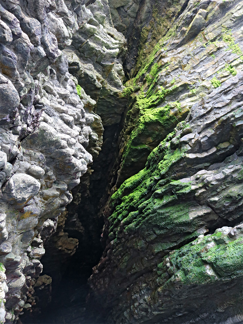 Algae around a crevice