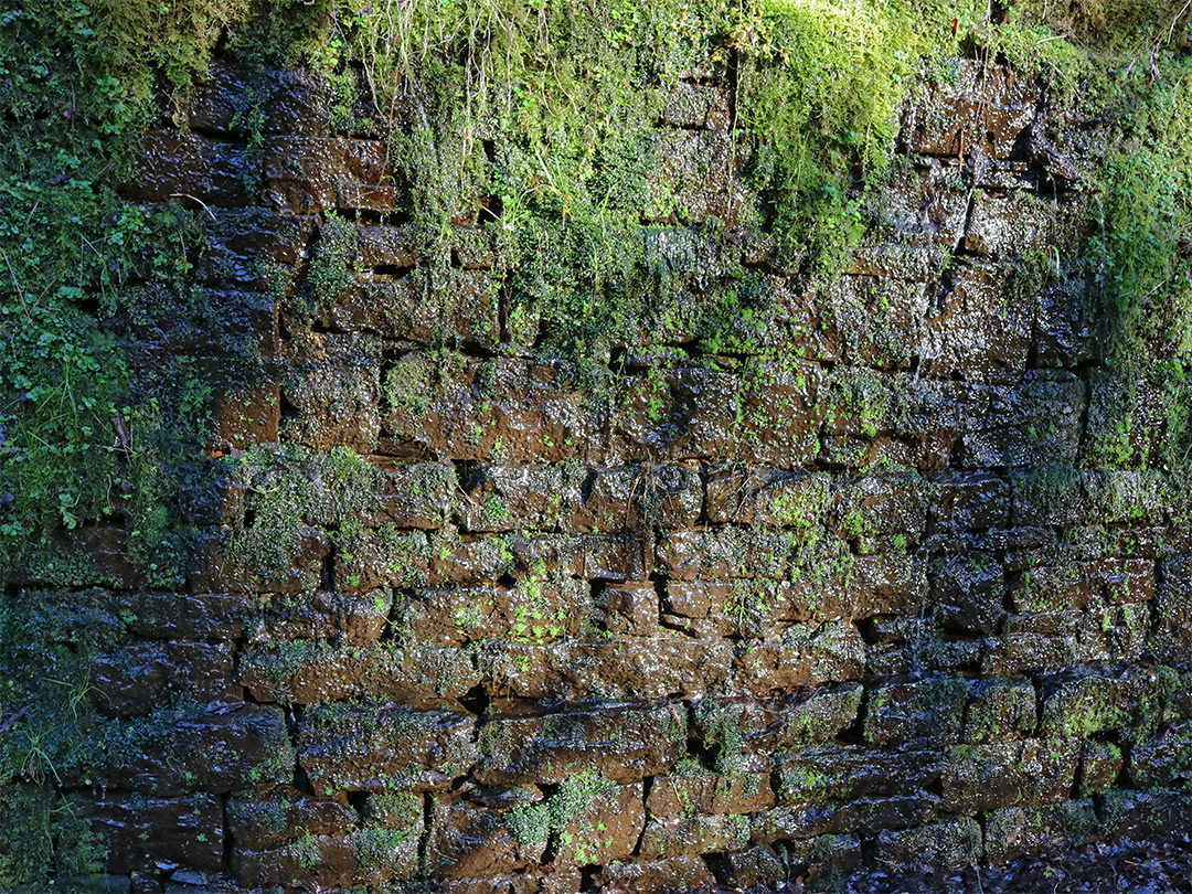 Mossy wall