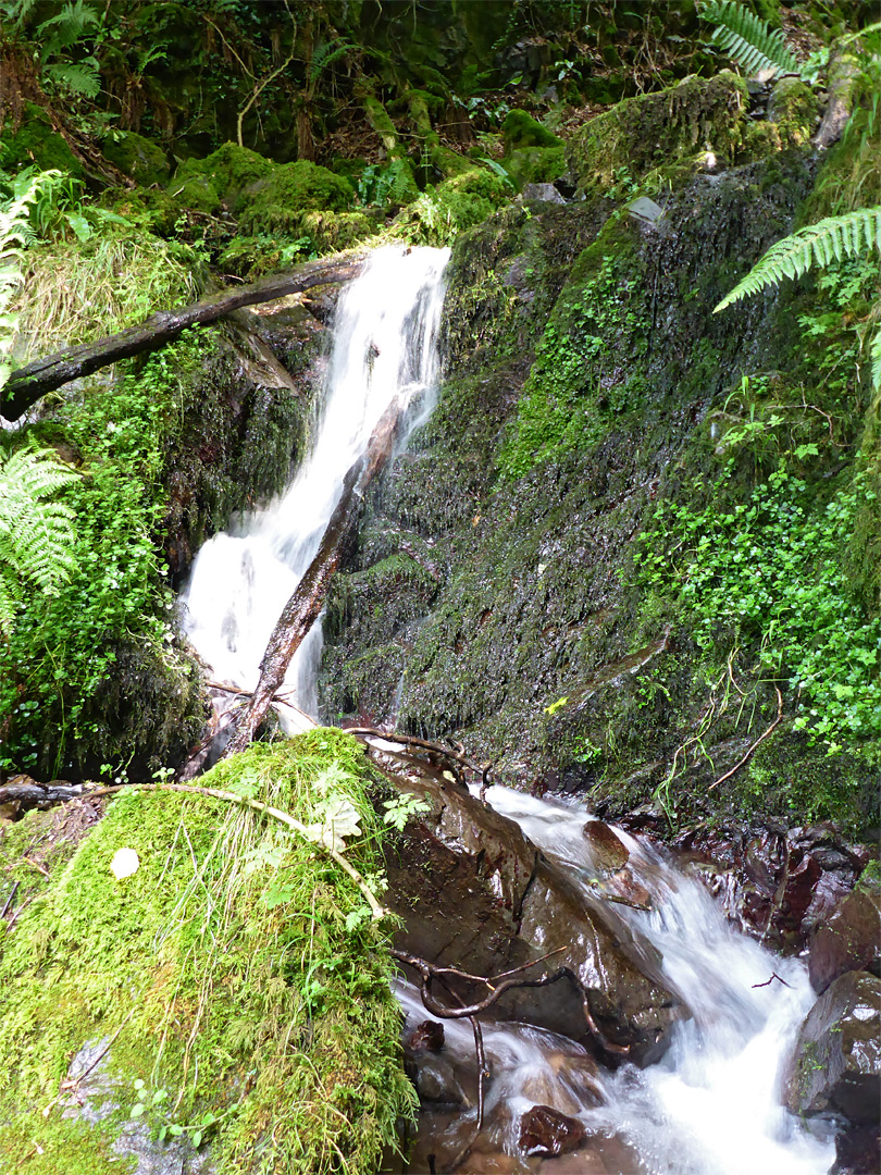 Waterfall in Twitchin Combe