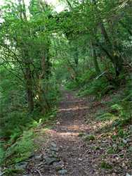 Path through Embelle Wood