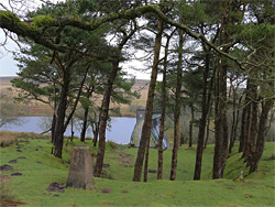 Trees west of the dam