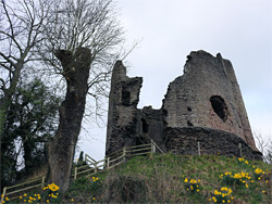 Daffodils below the keep