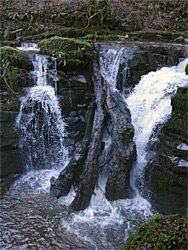 Logs and waterfall