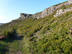 Path through gorse bushes