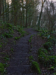 Steps in Oxwich Wood