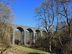 Trees below Pontsarn Viaduct
