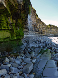 Seaweed-covered cliffs
