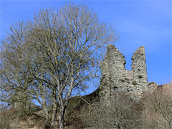 Trees below the keep