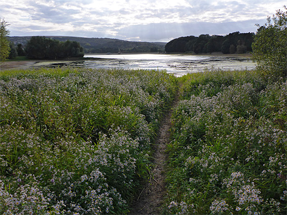 Path through asters