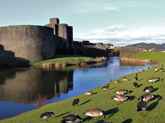Geese beside the front moat